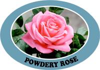 powdery rose.jpg